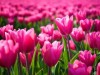 Фотоальбомы.  Времена года. розовые цветы.  Лето.