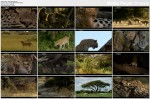 Okiem lamparta / Eye Of The Leopard (2006) PL.TVRip.XviD / Lektor PL